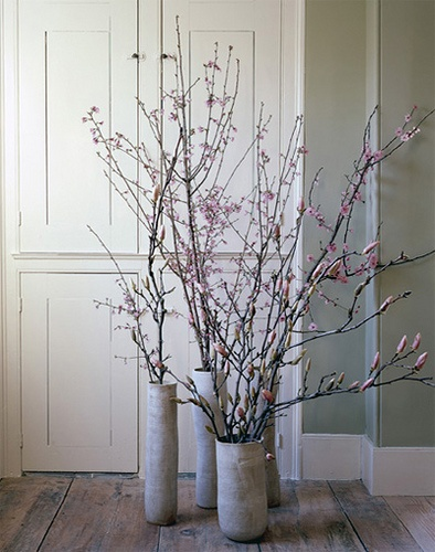 Cup Half Full Cherry Blossom Branches