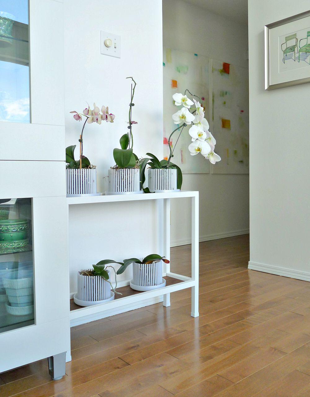 Planter with Walnut Shelves
