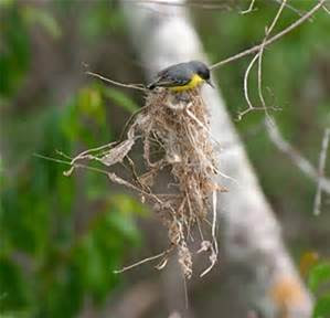 A bird making a nest