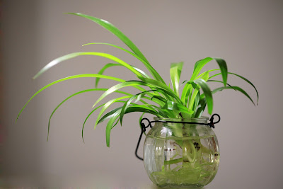 https://pixabay.com/pl/ro%C5%9Bliny-doniczkowe-zielony-ro%C5%9Blin-582820/