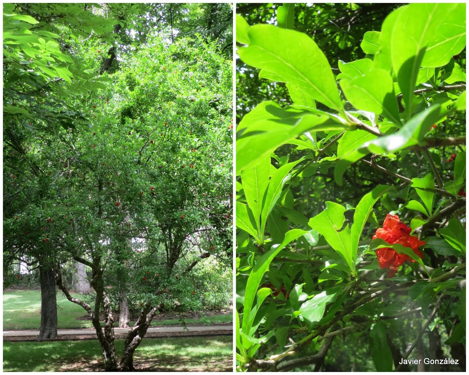 Parque del Retiro de Madrid. Granado / Pomegranate
