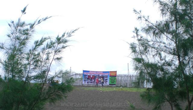 Penangkaran penyu di Pantai Cemara Banyuwangi.