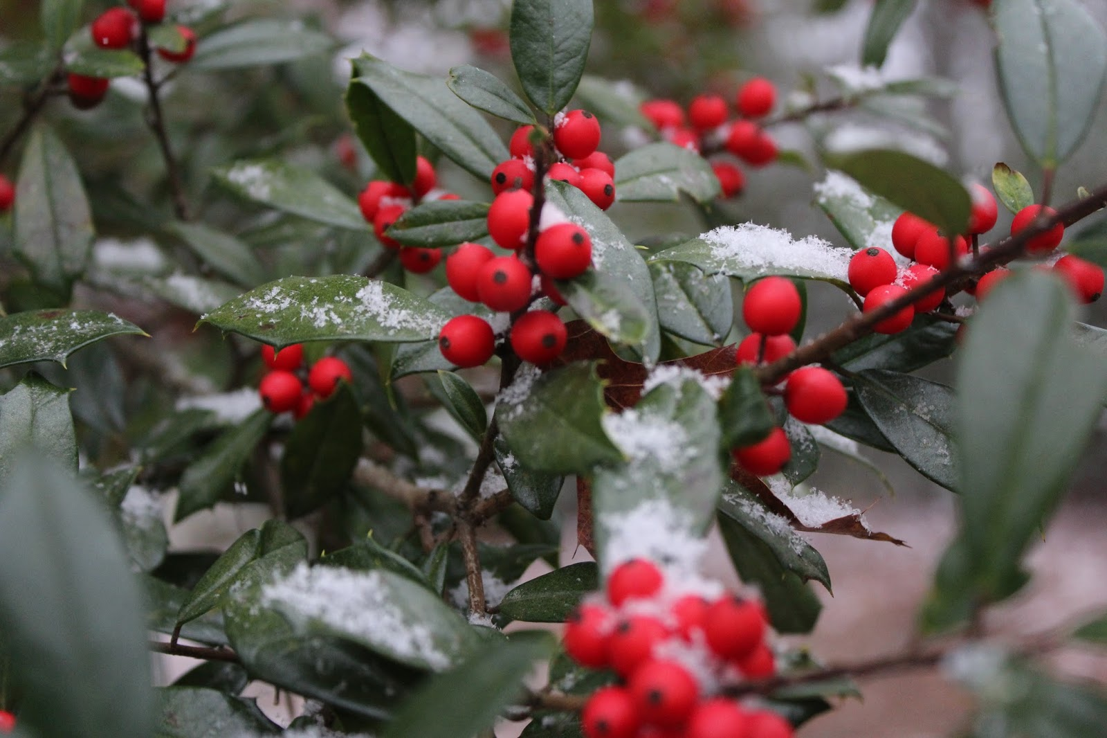 Appalachian Mountain Roots: Appalachian Traditions: Old Christmas