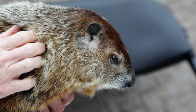 Groundhog Day – brought to you Modern Florida Homes specialist Tobias Kaiser