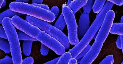 beberapa bakteri berbahaya di ponsel