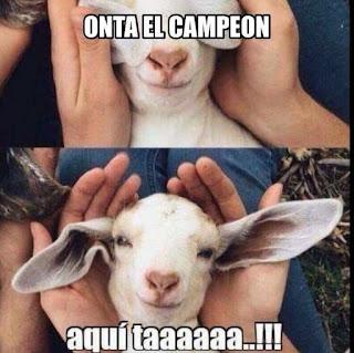 Memes Chivas Campeón