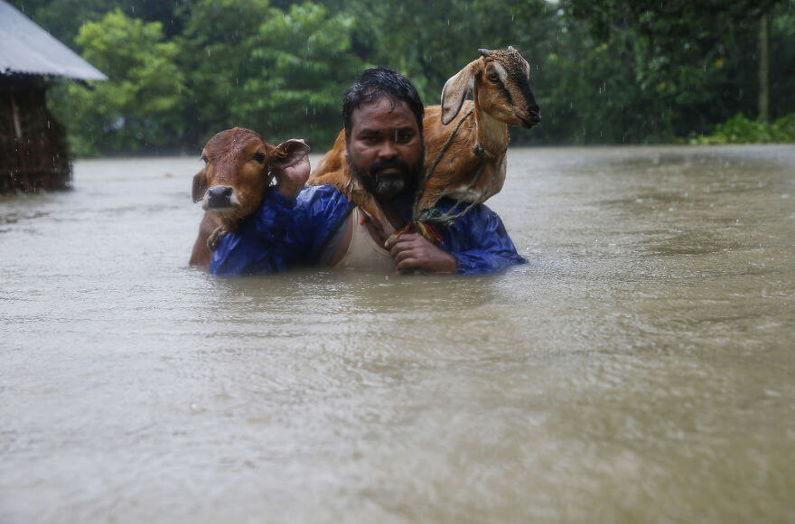 18 Devastating Pictures Of The Flooding In South Asia That Will Shock You - A Nepali Man Carries His Goat On His Shoulder As He Moves To Safer Ground At Topa Village In Saptari District
