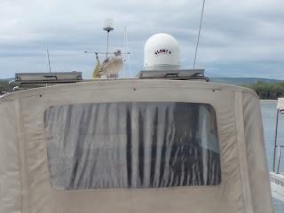 sirály a hajón