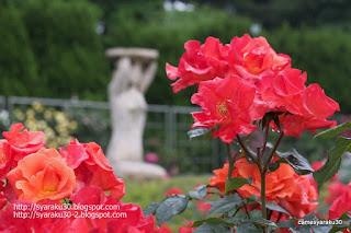 赤い薔薇と彫像の写真