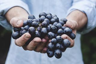 blog vin beaux-vins bio meilleur mauvais