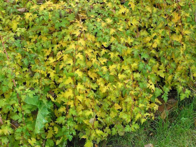 żółte liście jesienią