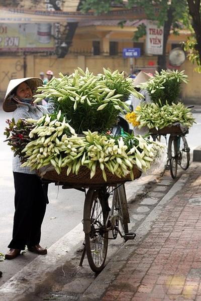 Hình ảnh hoa đẹp - Hoa loa kèn 07