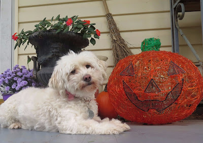Health benefits of pumpkin for dogs.  Healthy pumpkin. Can dogs eat pumpkin?  Is pumpkin safe for dogs? Pet health, dog health, dogs, pets