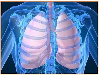 Contoh Soal dan Pembahasan Sistem Pernapasan dan Respirasi