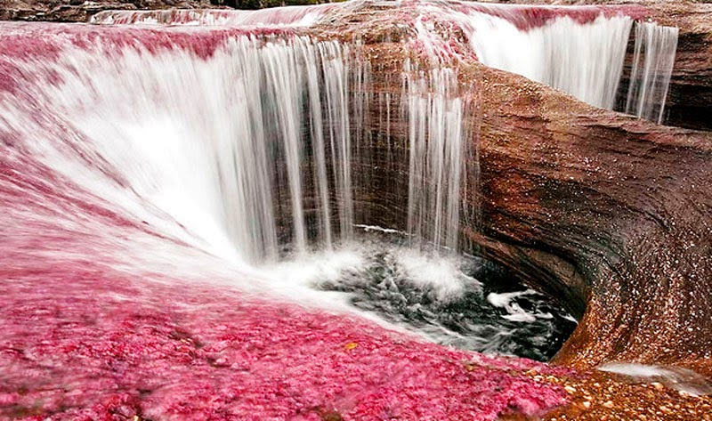 4. Caño Cristales, South America - 6 of the Worlds Most Majestic Rivers