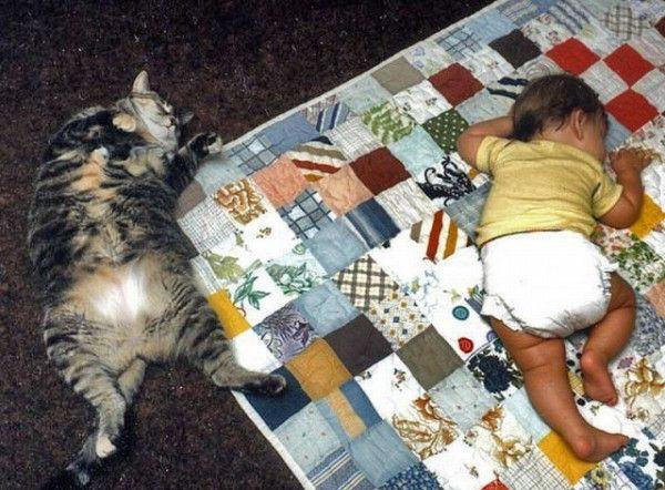 Selamatkan Kucing Malaysia Pelbagai Cara Kucing Tidur 3