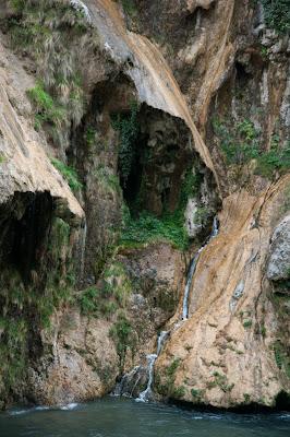 Naturaleza y Gaudí