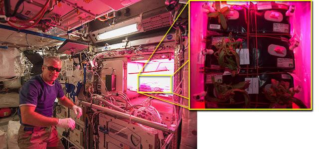 plantas no espaço - estação espacial internacional