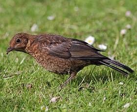 backyard birds - the good, the bad and the ugly