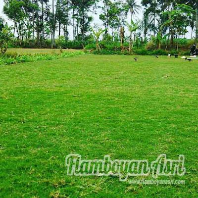 Jasa Tukang taman Surabaya Jual Suplayer Gajah Mini