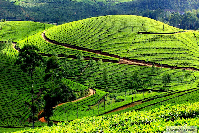 travel, ooty, hill station, air asia,