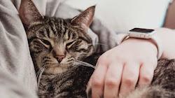 Loài mèo hầu như rất thích vuốt ve nhưng phải đúng cách