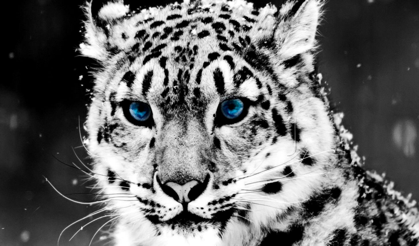Cool Wallpapers Of Animals Views Wallpapers