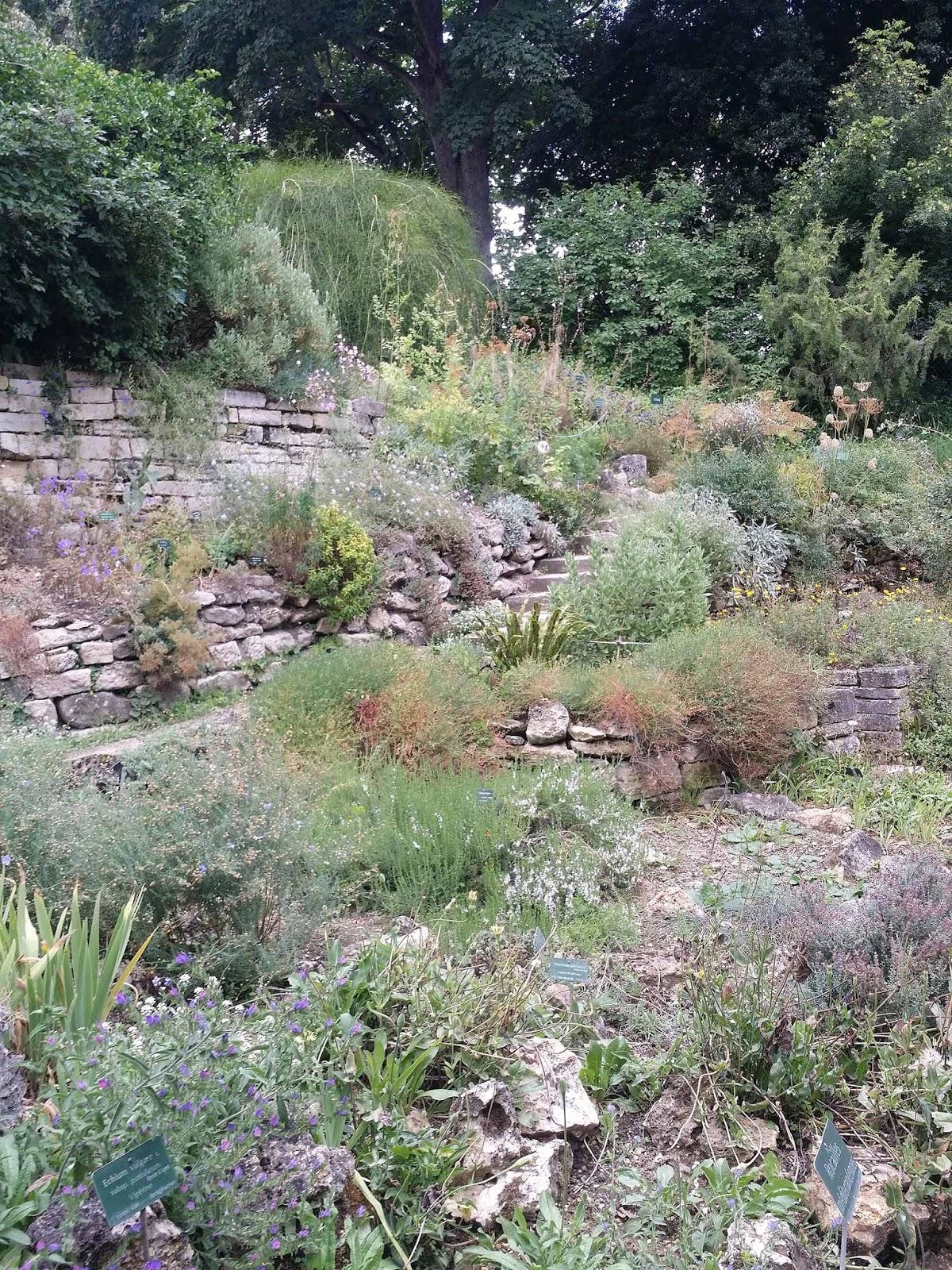 art de vivre la peinture de peintrefiguratif croquis jardin des plantes paris cot jardin alpin. Black Bedroom Furniture Sets. Home Design Ideas