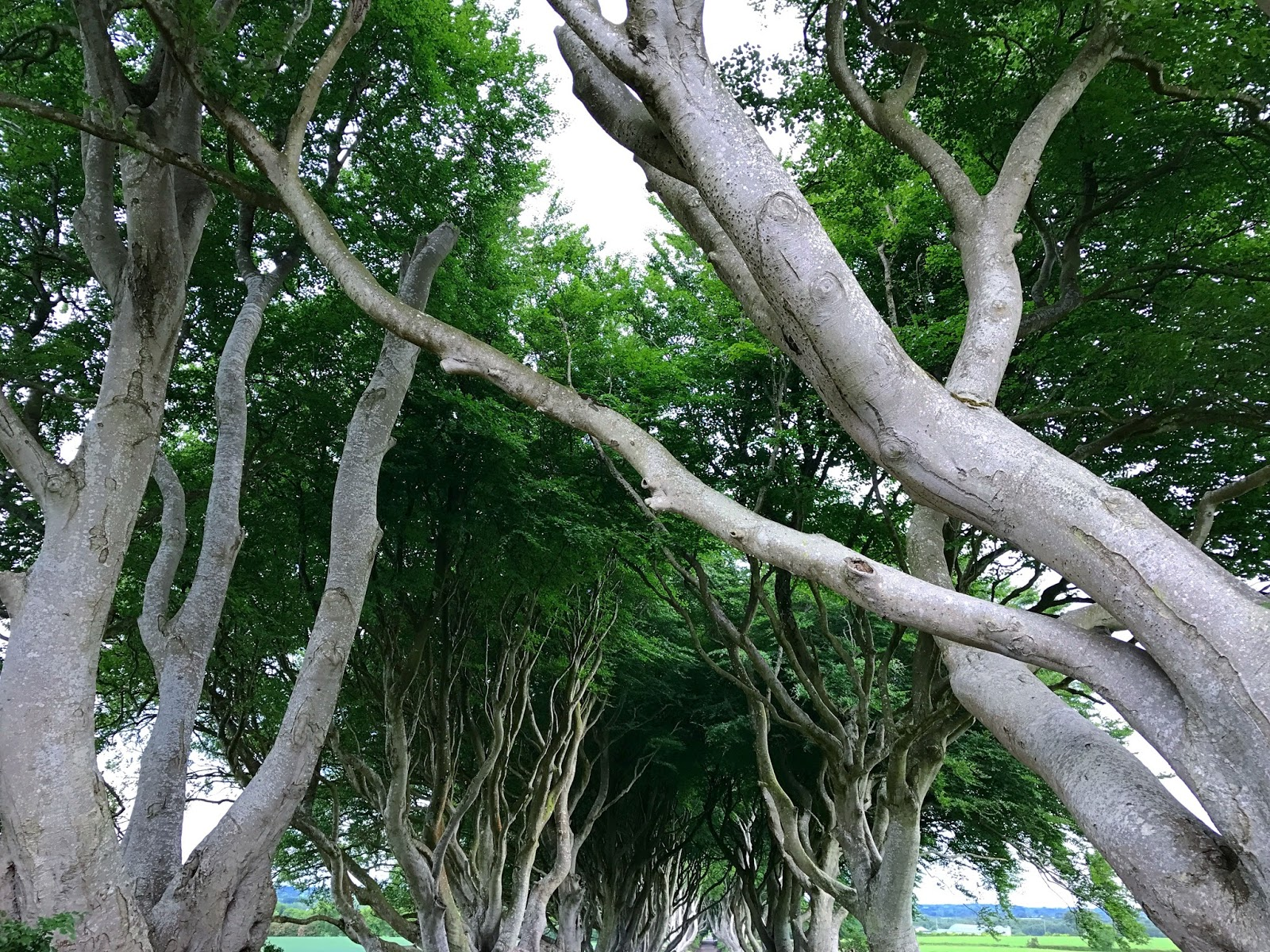 Ireland Belfast Game of Thrones Dark Hedges