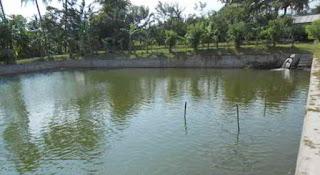 cara budidaya ikan nila di kolam tembok,cara budidaya ikan nila di kolam tanah,cara budidaya ikan nila di kolam beton,cara budidaya ikan nila nirwana,