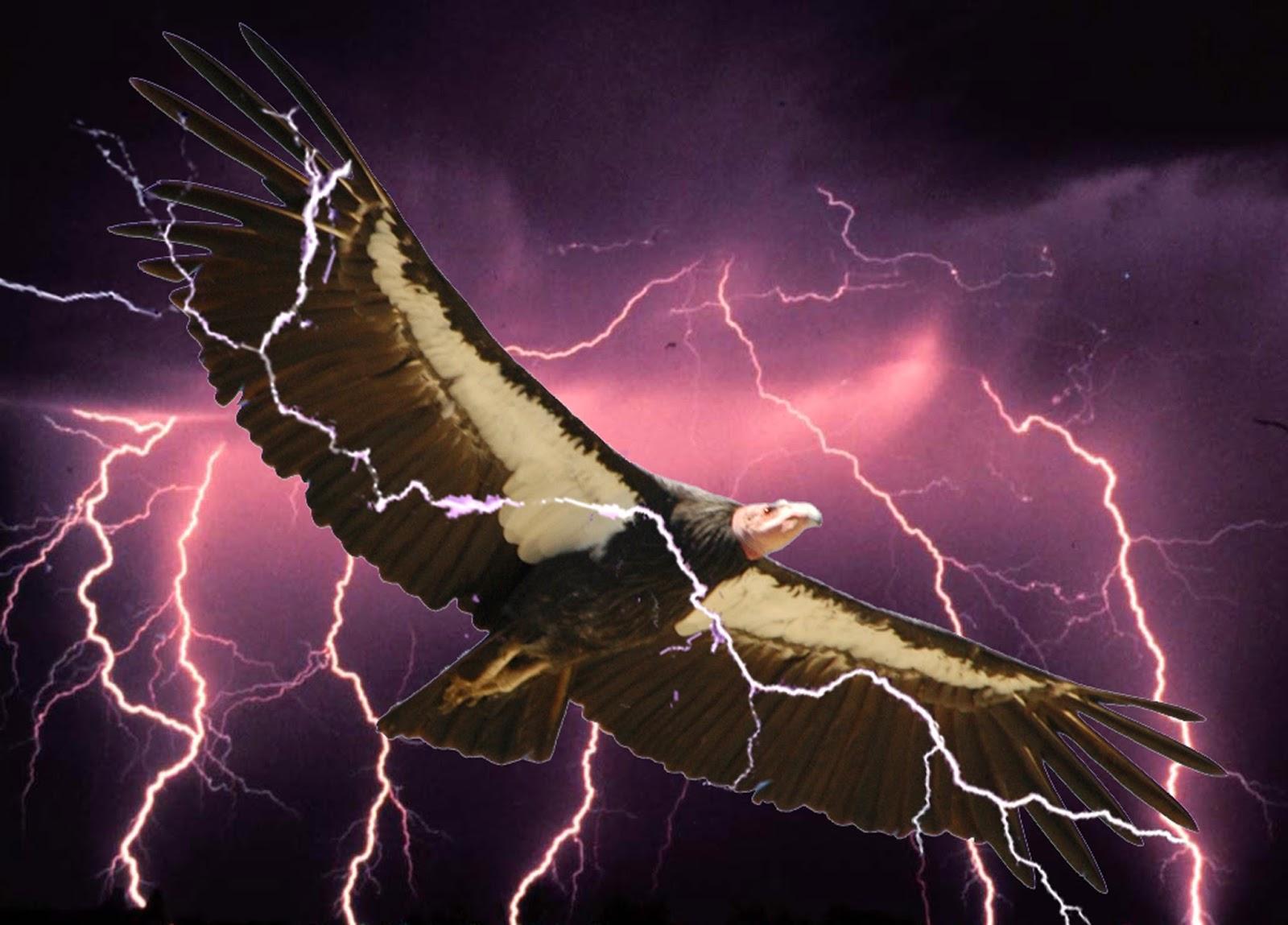 Thunderbird Animal - photo#25