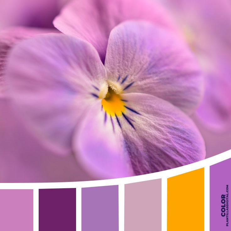 color_442