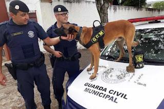 Canil da GCM de Limeira passa a ser lei e reforça policiamento
