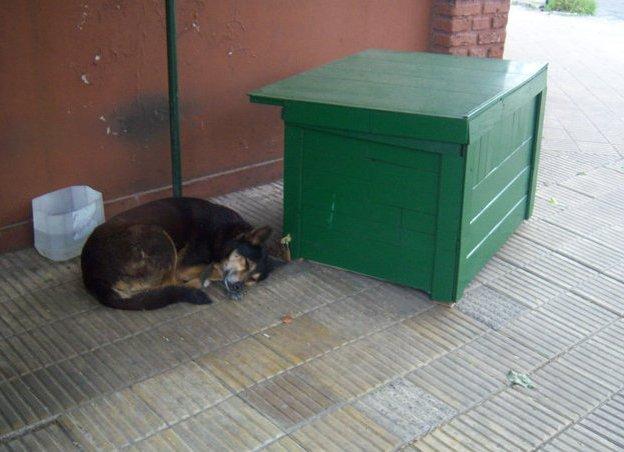 Perros de exterior ¿ Porque viven menos?