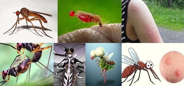 Sivrisinek Kovucu, Neye Gelmez? Isırık İzi Nasıl Geçer? Hakkında İlginç Bilgiler