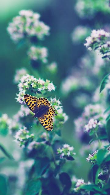 Top 99 Hình nền điện thoại phong cảnh thiên nhiên cực đẹp