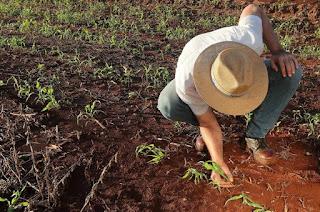 http://vnoticia.com.br/noticia/2376-governo-libera-r-12-5-bilhoes-para-financiar-safra-agricola-de-2018-e-2019