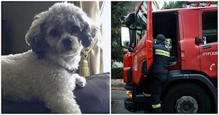 Θεσσαλονίκη: Σκύλος έσωσε μητέρα και κόρη από τη φωτιά που ξέσπασε όταν η οικογένεια κοιμόταν
