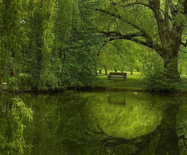 أجمل صور للطبيعة الخضراء المذهلة ستراها عيناك