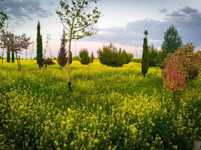 La primavera irrumpe con fuerza y nos llena de color
