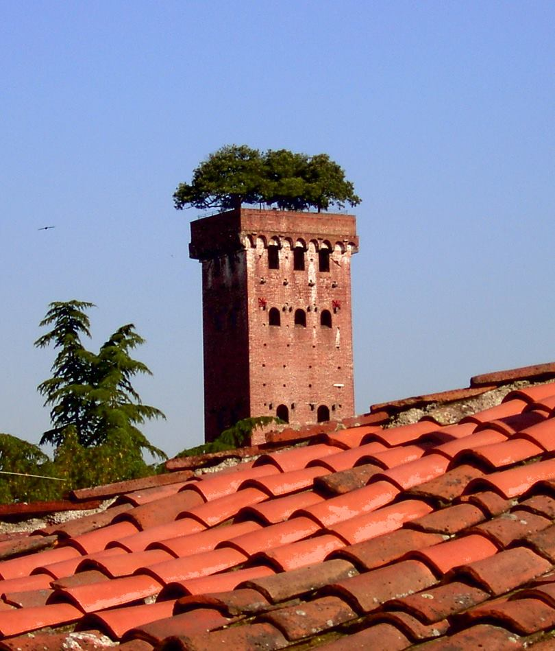 Guinigi Tower Crowned With Oak Trees