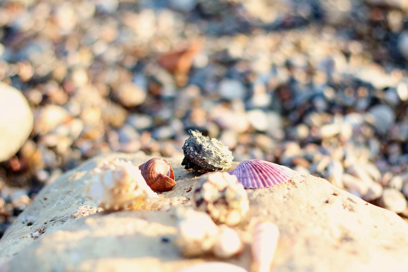 summer beach and sea shells