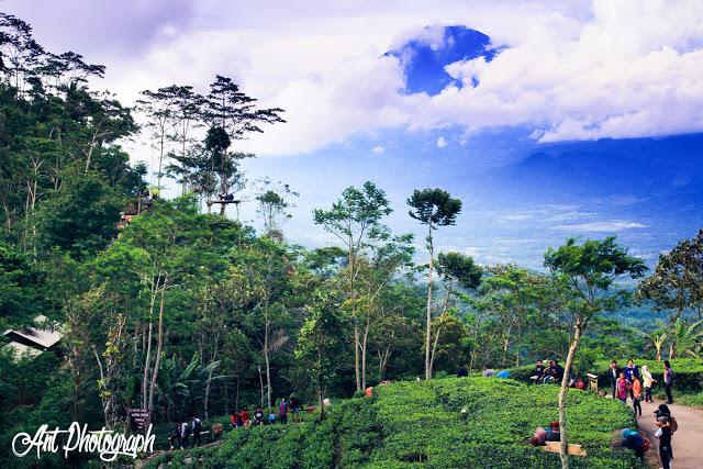 Wisata di Kulon Progo