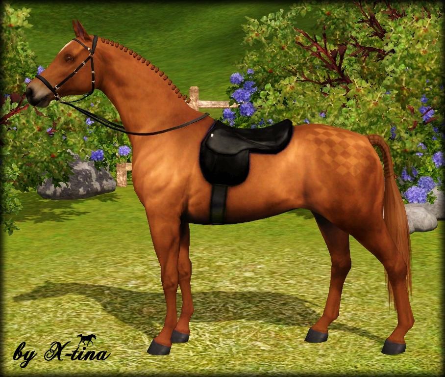 Exquisite Arabians British Riding Pony By X Tina
