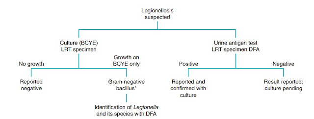 Schema for identification of Legionella organisms. BCYE, Buffered charcoal yeast extract; LRT, lower respiratory tract; DFA, direct fluorescent antibody. *Biohazard precautions; consider organisms such as Francisella spp.