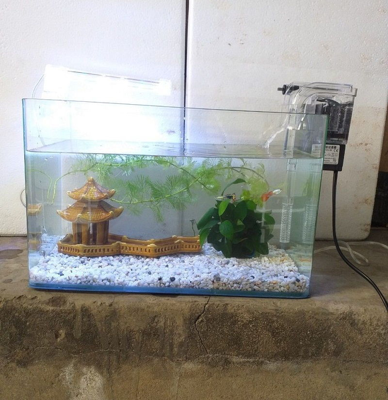 The Toxic Plants for Betta Fish Cover Up