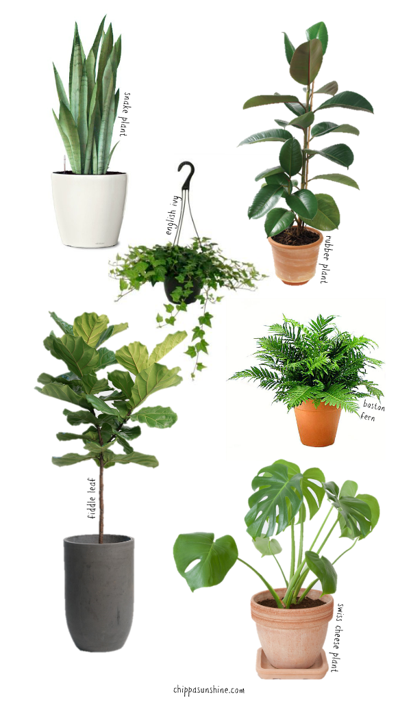 6 easy to care for houseplants chippasunshine - Easy care indoor plants ...