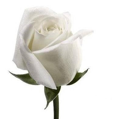 Significado De Los Colores De Las Rosas Significado De Los Colores