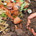 How to Make Compost from Kitchen and Garden Waste?
