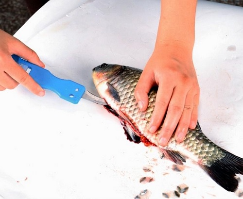 Ikan memang menjadi materi masakan favorit di masyarakat Cara Cepat Membersihkan Ikan